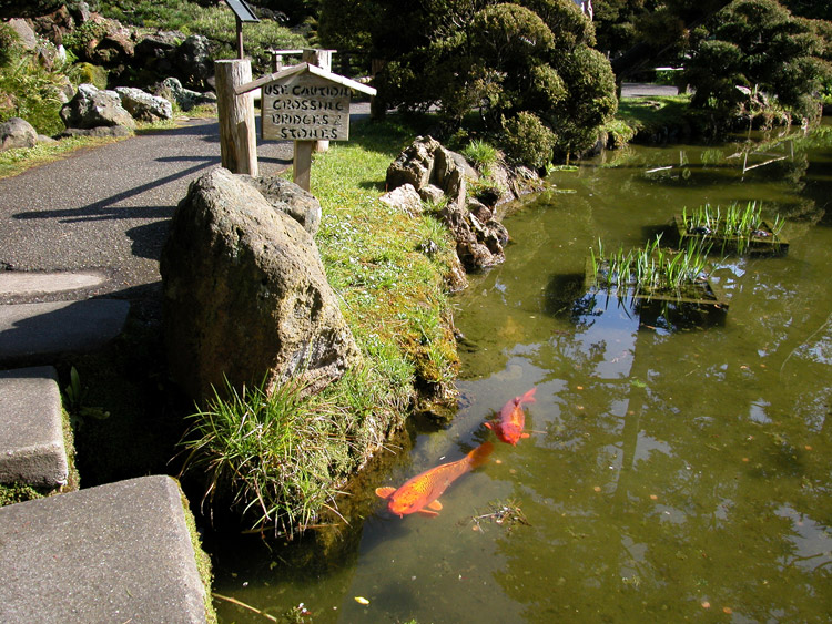 Golden gate park middle san francisco neighborhoods for Koi pond japanese tea garden san francisco